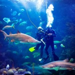 Divers in coral reef